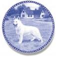 White Shepherd - American-Canadian