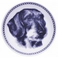 Dachshund - Wirehaired